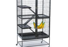 Photo of How big should a cage be for 1 ferret