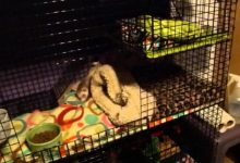 Photo of How to keep ferret cage from smelling