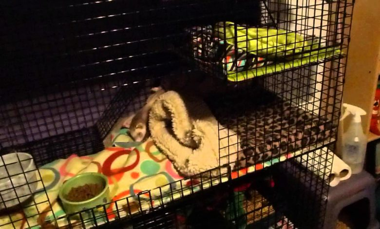 How to keep ferret cage from smelling