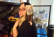 Photo of How to train a ferret to sit on your shoulder