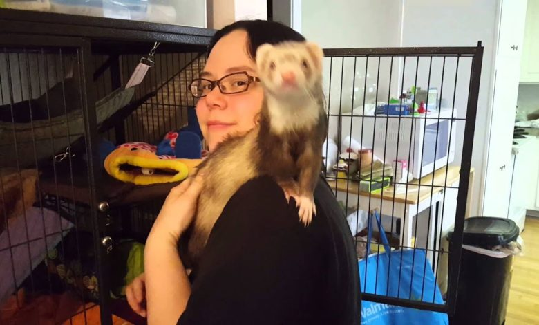 How to train a ferret to sit on your shoulder